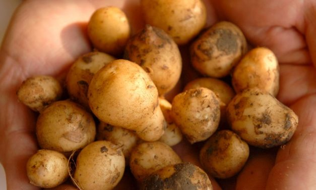 What you have seen in the past might been small potatoes